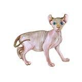 Retrato de la acuarela del gato sin pelo raro del duende en el fondo blanco Animal doméstico casero dulce detallado dibujado mano Fotos de archivo libres de regalías