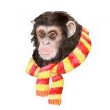 Retrato de la acuarela del mono con una bufanda Imagen de archivo