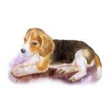 Retrato de la acuarela del perro inglés popular del beagle en el fondo blanco Animal doméstico casero dulce dibujado mano Imagenes de archivo