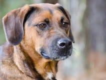 Retrato de la adopción de la mezcla del perro Imagen de archivo libre de regalías