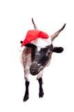 Retrato de la cabra enana en sombrero de la Navidad en blanco Foto de archivo libre de regalías