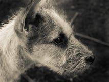 Retrato de la cara lateral del perro adentro Fotos de archivo libres de regalías