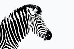 Retrato de la cebra ilustración del vector