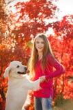 Retrato de la chica joven que se sienta en la tierra con su perro perdiguero del perro en escena del otoño Fotos de archivo libres de regalías