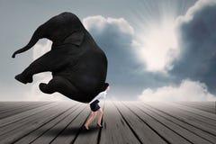Retrato de la empresaria que levanta el elefante pesado imagen de archivo