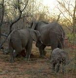 Retrato de la familia del ` de los elefantes con sus elefantes del bebé en la sabana Imagen de archivo libre de regalías