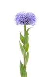 Retrato de la flor Imagen de archivo libre de regalías