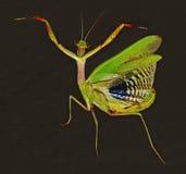 Retrato de la mantis religiosa imagenes de archivo