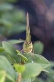 Retrato de la mariposa Fotografía de archivo