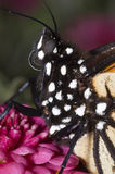 Retrato de la mariposa de monarca imágenes de archivo libres de regalías