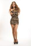 Retrato de la moda de la muchacha morena joven en vestido del leopardo Fotos de archivo libres de regalías