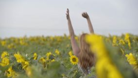 Retrato de la muchacha confiada joven con el pelo rojo que camina a través del campo del girasol que aumenta las manos Concepto d almacen de video