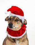 Retrato de la Navidad del perrito Imagen de archivo