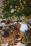 Retrato de la Navidad del perro de la raza del boxeador Fotografía de archivo
