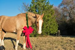 Retrato de la Navidad de un caballo Fotografía de archivo