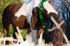 Retrato de la Navidad de un caballo Imagen de archivo libre de regalías