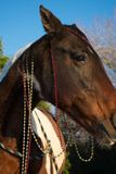Retrato de la Navidad de un caballo Foto de archivo libre de regalías