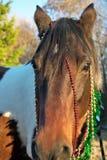 Retrato de la Navidad de un caballo Fotos de archivo