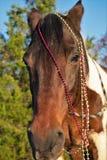Retrato de la Navidad de un caballo Imágenes de archivo libres de regalías