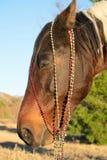 Retrato de la Navidad de un caballo Fotos de archivo libres de regalías