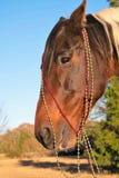 Retrato de la Navidad de un caballo Imagen de archivo