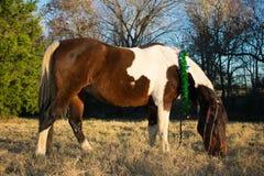 Retrato de la Navidad de un caballo Foto de archivo
