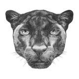 Retrato de la pantera ilustración del vector