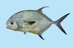 Retrato de la pesca del permiso Fotos de archivo libres de regalías