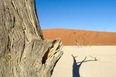 Retrato de la silueta del árbol muerto en el deadvlei, Sossusvlei, parque nacional Namibia de Namib Naukluft fotos de archivo