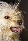 Retrato de la sonrisa del perro. imagenes de archivo