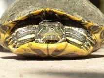 Retrato de la tortuga Imagen de archivo libre de regalías