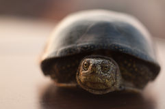 Retrato de la tortuga de mar Imagenes de archivo