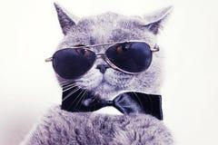 Retrato de las gafas de sol que desgastan del gato Fotos de archivo