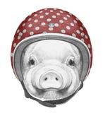Retrato de leitão com capacete ilustração royalty free