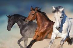 Retrato de los caballos en el movimiento Foto de archivo libre de regalías
