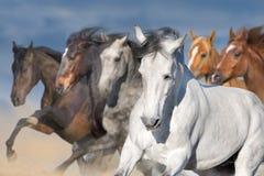 Retrato de los caballos en el movimiento imagen de archivo libre de regalías