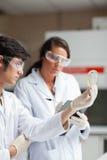 Retrato de los estudiantes de la ciencia que miran el plato de Petri Fotografía de archivo libre de regalías