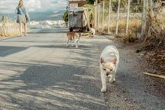 Retrato de los gatos de la calle en Creta Grecia Foto de archivo libre de regalías