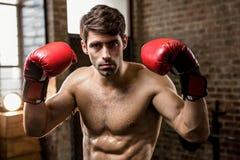 Retrato de los guantes de boxeo del hombre que llevan con los brazos aumentados Foto de archivo libre de regalías