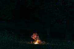 Retrato de los pares felices del abarcamiento que se sientan por el fuego en la noche Fotografía de archivo