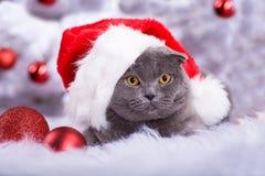 Retrato de Navidad de un gato imagenes de archivo