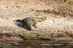 Retrato de Nile Crocodile Imagen de archivo