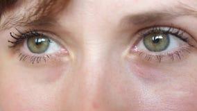 Retrato de ojos gris-verdes hermosos de una mujer hermosa joven primer hermoso de las muchachas de los ojos almacen de video