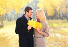 Retrato de pares sonrientes jovenes felices con las hojas de arce amarillas en soleado caliente imágenes de archivo libres de regalías