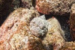 Retrato de piedra peligroso de los pescados Imagen de archivo