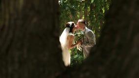 Retrato de recienes casados felices en un parque soleado del verano metrajes