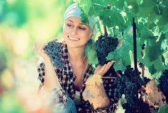 Retrato de rir o trabalhador fêmea na exploração agrícola da uva foto de stock royalty free