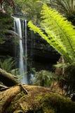 Retrato de Russell Falls Foto de archivo libre de regalías
