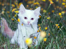 Retrato de um branco bonito Fotos de Stock