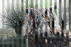 Retrato de um bubão euro-asiático do bubão da coruja de águia e de seu corte do habitat nas tiras, no conceito para a extinção da ilustração do vetor